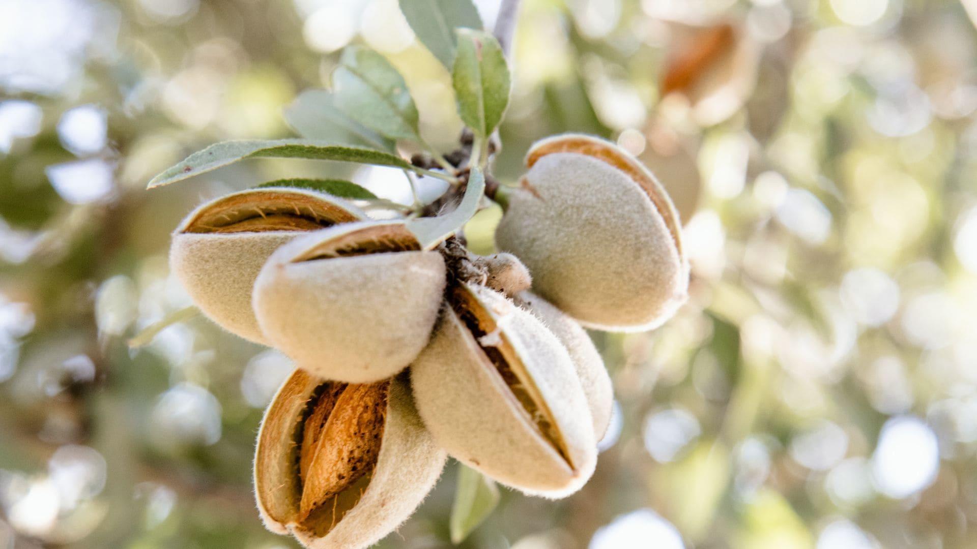Granada en cuatro alimentos icónicos (y cómo saborearlos en su esplendor)